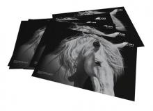 Black and white image of white horse with Ricoh logo